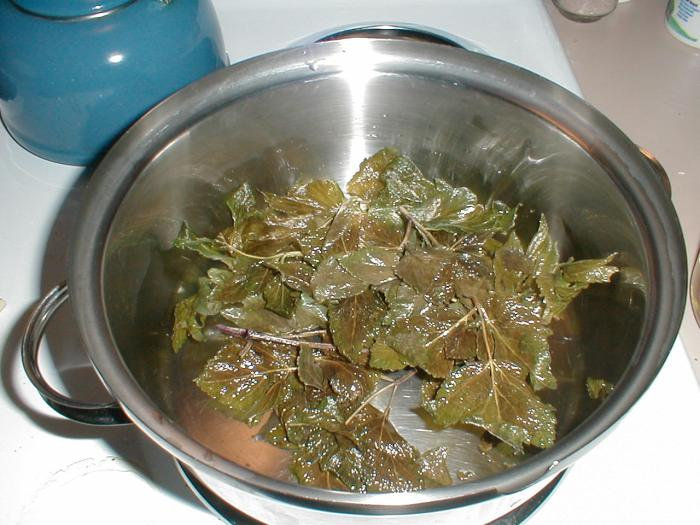 Olive oil being infused with the angelica plant.