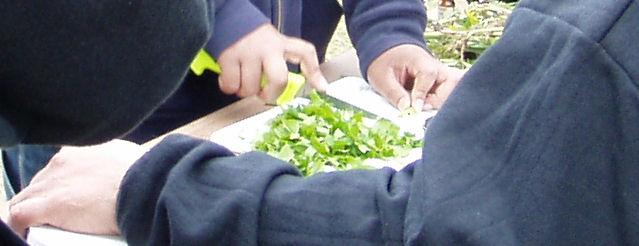 Chopping qanisan.
