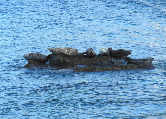 There are actually 8 harbor seals, but one is kind of on the other side of the rock.